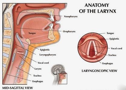 Microlaryngeal Surgeries | Dr Seemab Shaikh